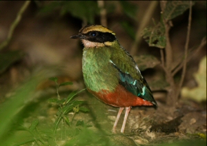 Birding u
