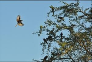 Kidepo birds