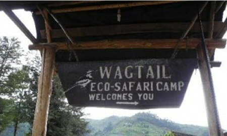 Wagtail safaro