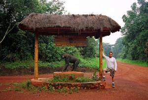 chimpanaa
