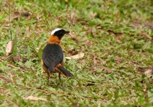 weaverrr bird