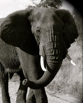 eleph4